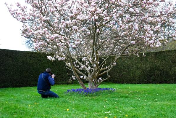 Dave & Tulip Tree
